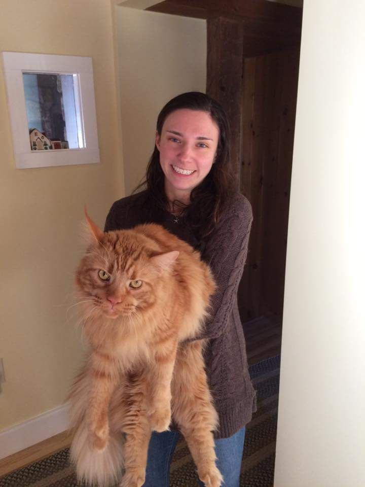 My coworker met a giant pissed off cat for Christmas funnyrepost