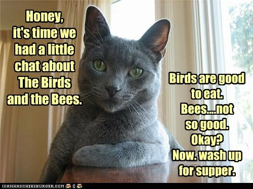 child talk captions birds and the bees parent Cats