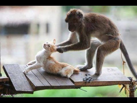 Cat fighting with monkey Monkey VS Cat Top 10 Funny Videos 2016 monkey