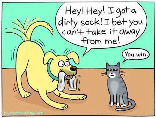 Funny dog and cat cartoon