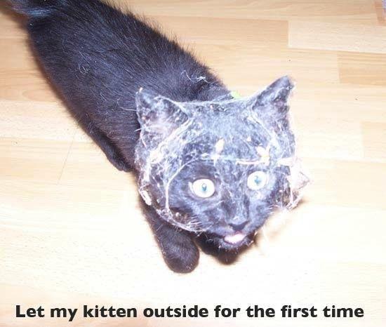 funny photos funny pics funny funny animals funny vids funny cats