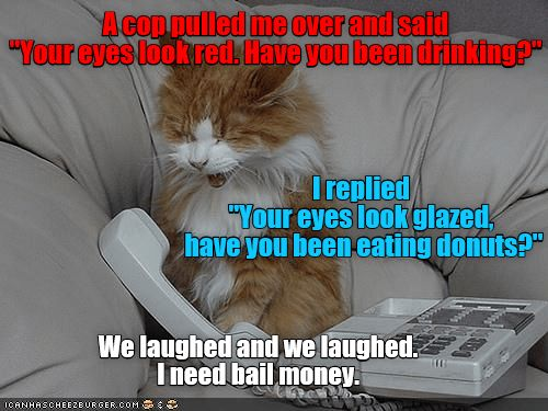 cops cat drinking red donuts bail laughed eyes glazed caption pulled over