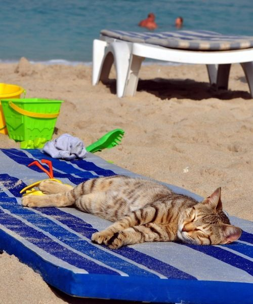 Pick Funny Beach Cat The Day