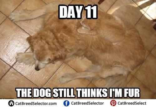 Funny Cat Memes Clean