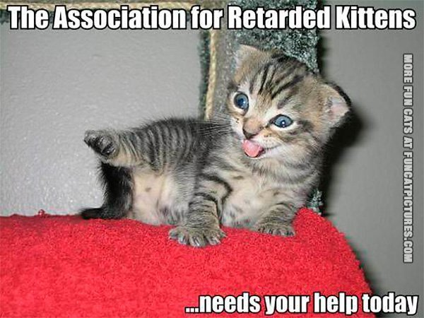 funny cat pics the association for retarded kittens
