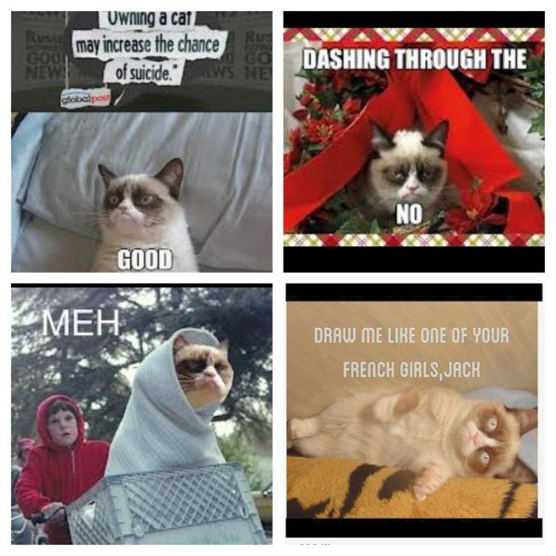 This cat seriously makes my life so much better picstitch tard grumpycat