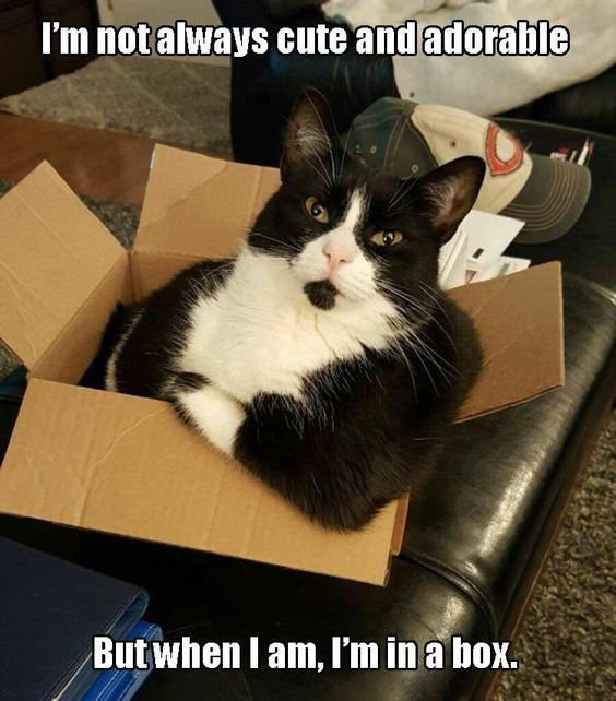 nice Most Funny Quotes 30 Hilarious Cat Memes Check more at funny quotes 30 hilarious cat memes 3