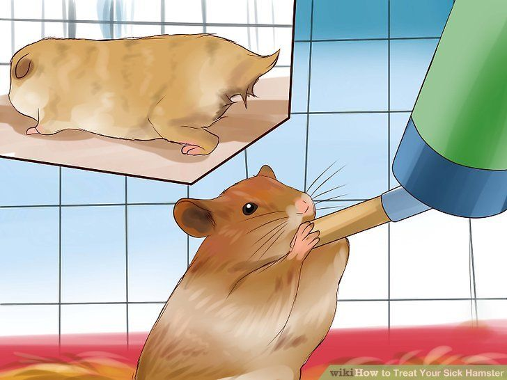 Image titled Treat Your Sick Hamster Step 3