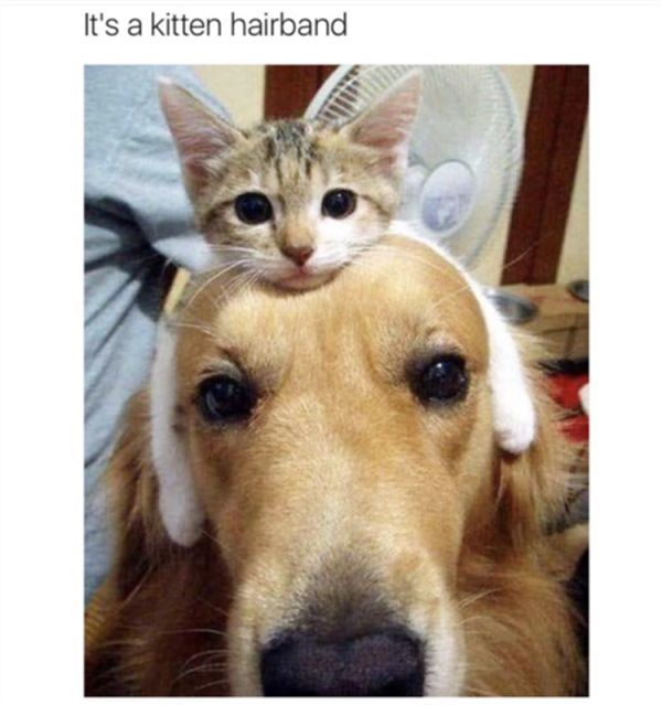 Funny Animal The Day 23 Pics humor funny meme picture