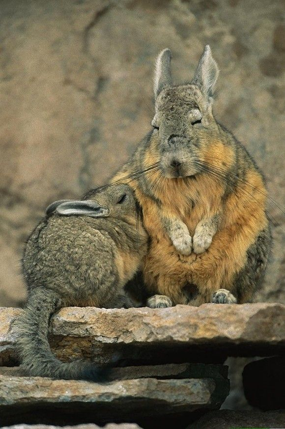Snuggling up Beautiful Creatures Animals Beautiful Cute Baby Animals Funny Animals Rodents
