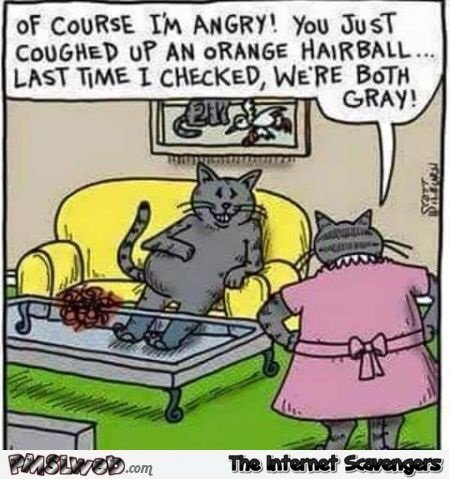 Cheating cat funny cartoon