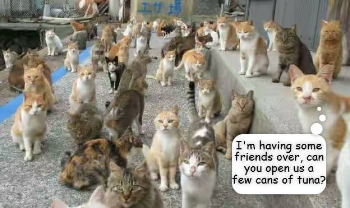 10 Funny Cat Meme to have a good laugh