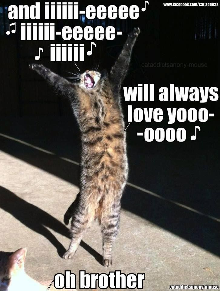 I will always love you Cat Kinds Cats Funny Cat Funny