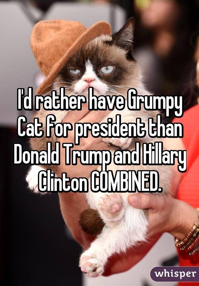Grumpy Cat politics cats humor grumpy