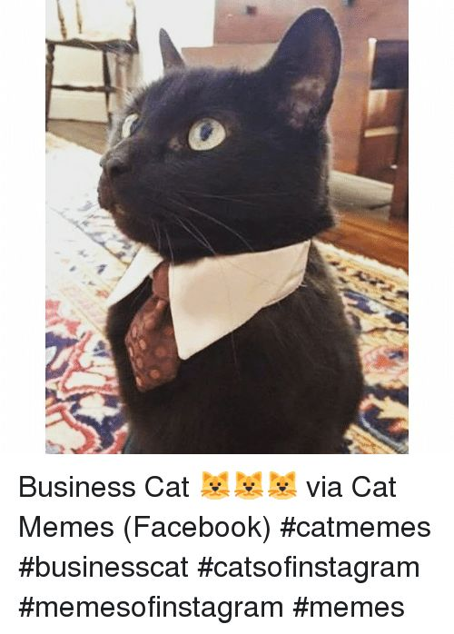 Cats and Funny Business Cat 🐱🐱🐱 via Cat Memes