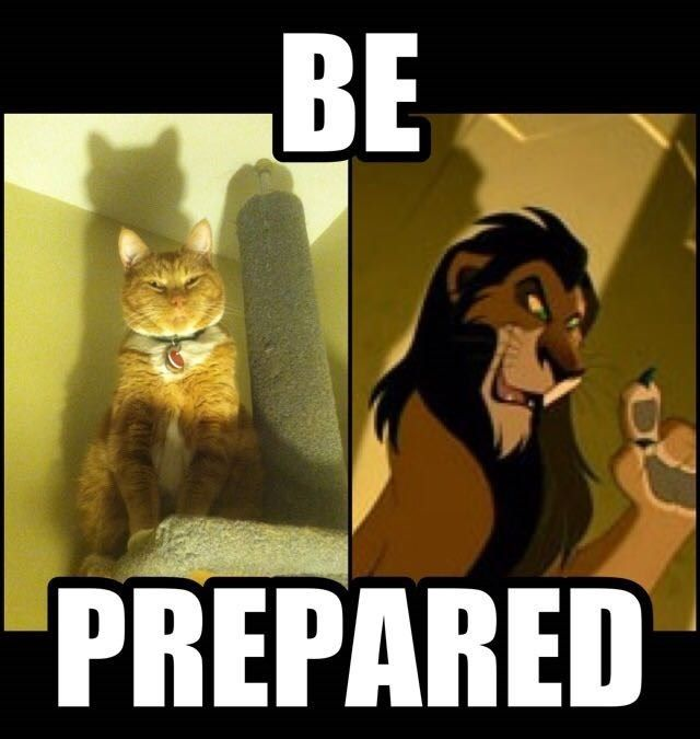 funny memes cat acts like scar