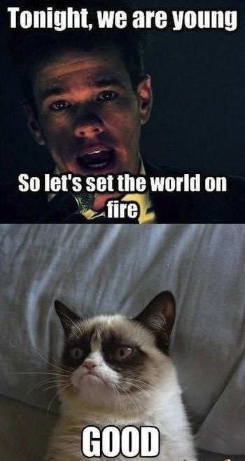 Top 40 Funny Grumpy cat Funny Humor
