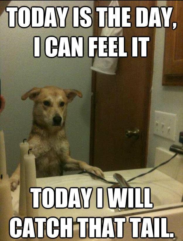 45 Funny Dog Memes Pets Pinterest
