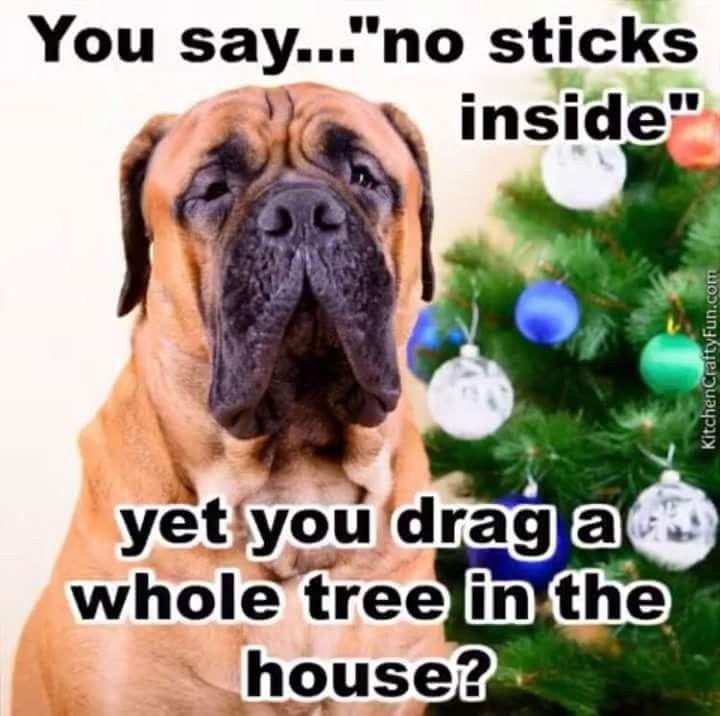 Dog Christmas Tree Meme.See The Prodigious Funny Dog Xmas Memes Hilarious Pets