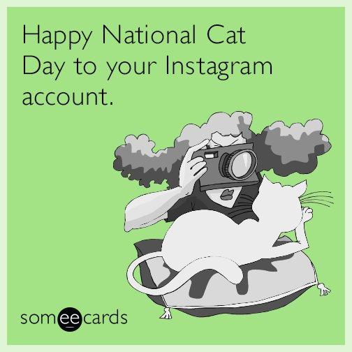 Happy National Cat Day to your Instagram account
