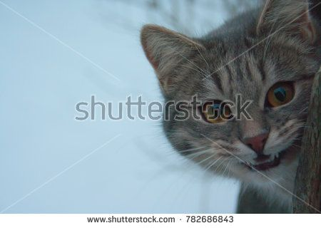 Gray angry funny smile striped cat is large in fairy winter Cheshire cat in Alice