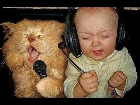 funny baby cats
