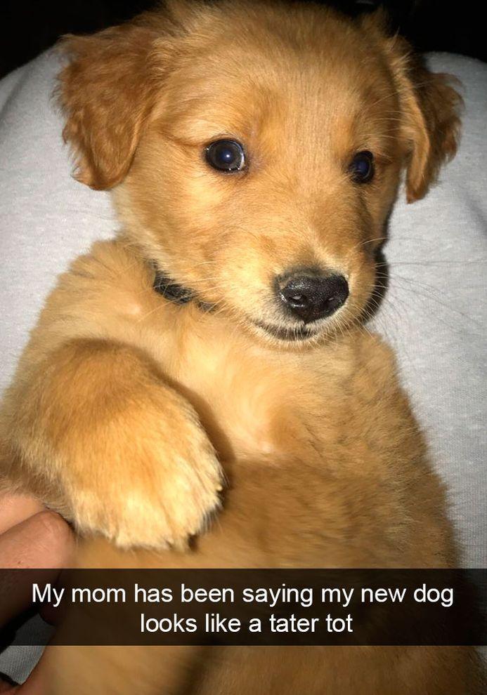 Funny Snapchats Dog – 190 Pics Funny Animal Quotes Animal Memes Animal Logic