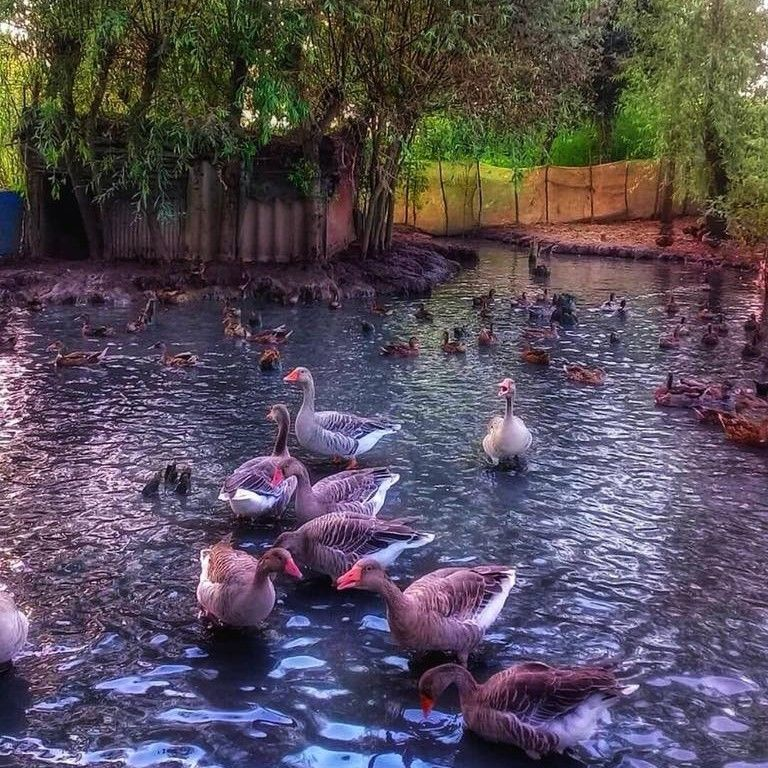 Pond in the city of Rasht near the Caspian coast