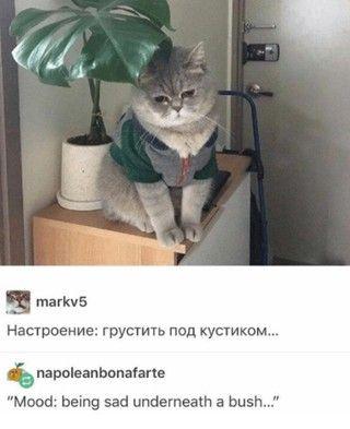 Image Markv5 Tumblr Markv5 posts cat memes