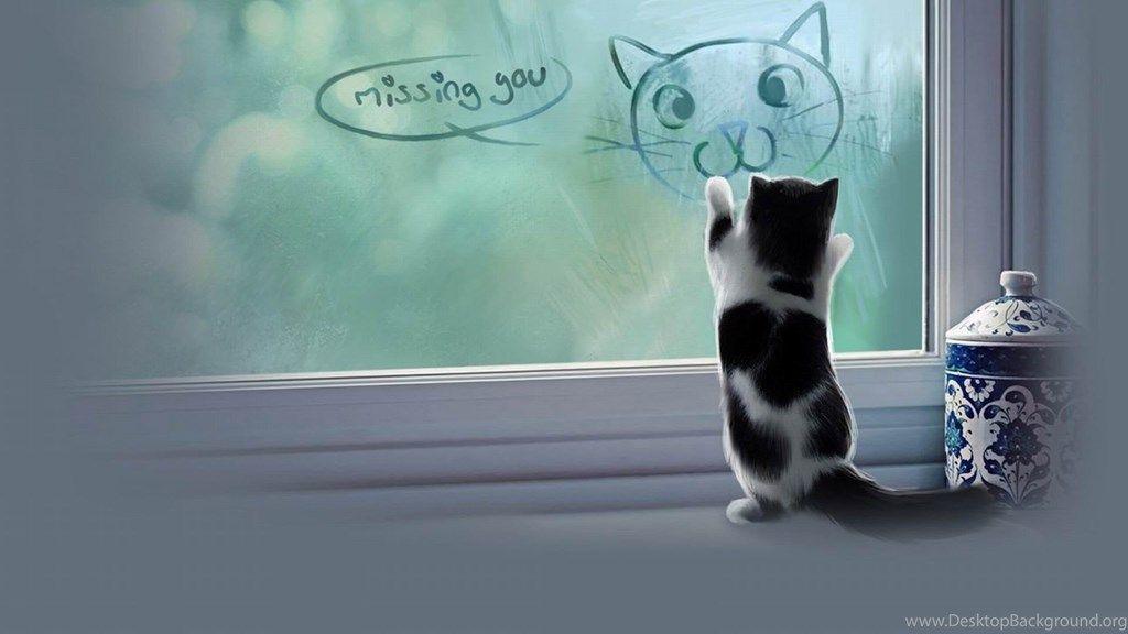 Cat Meme Quote Funny Humor Grumpy Kitten Sad Love Mood Wallpapers Desktop Background