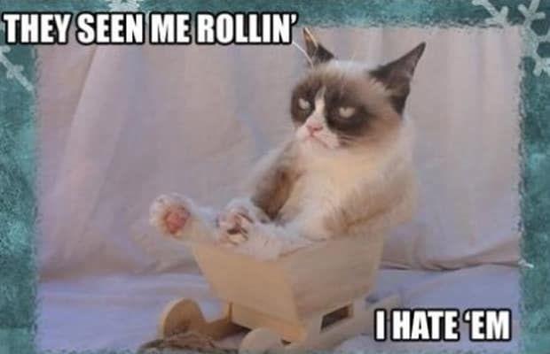 Grumpy Cat Rollin
