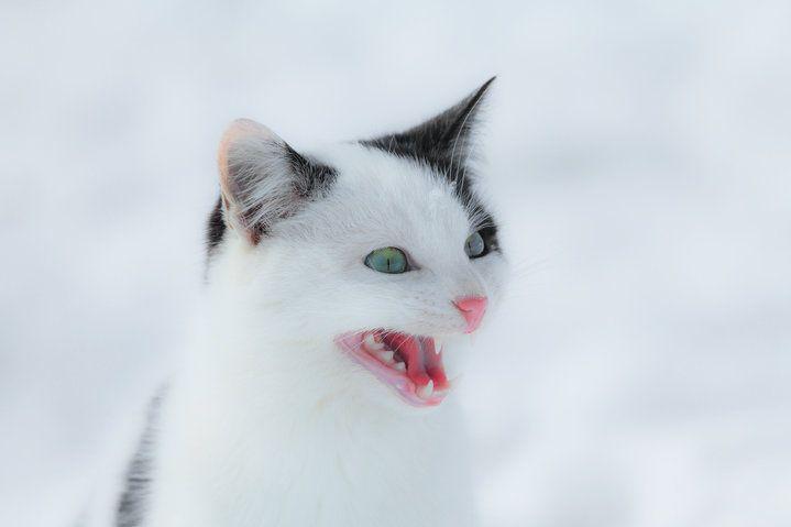 JOKE Cat Vs Dog — War The Diaries