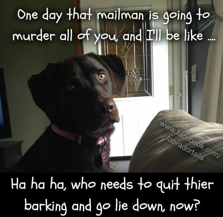 e day that mailman is going to murder all of you and I ll be like Ha ha ha who needs to quit their barking and go lie down now