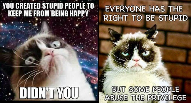 Grumpy Cat funny memes Memes stupid people stupidy cat memes