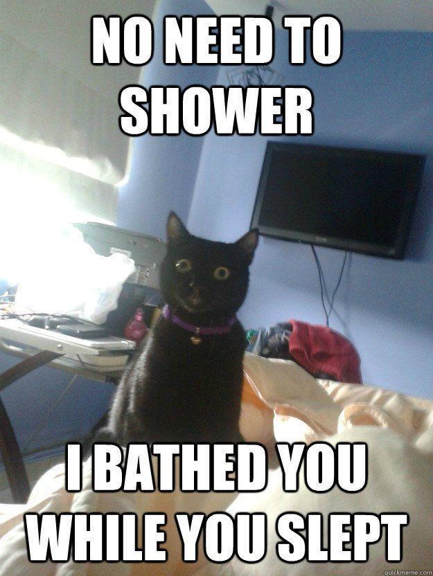 Top 30 Funny cat Memes