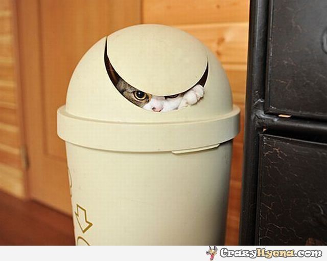 funny cat hiding in the trash bin
