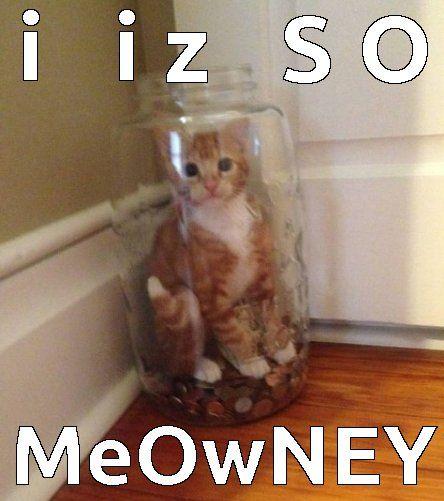 cat money funny