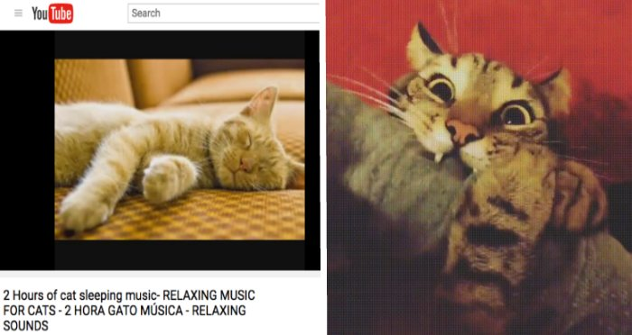 relaxing cat2