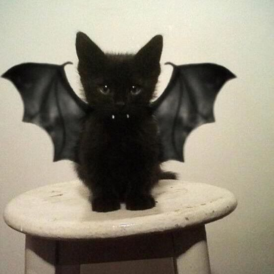 Batcat when he was just a kitty