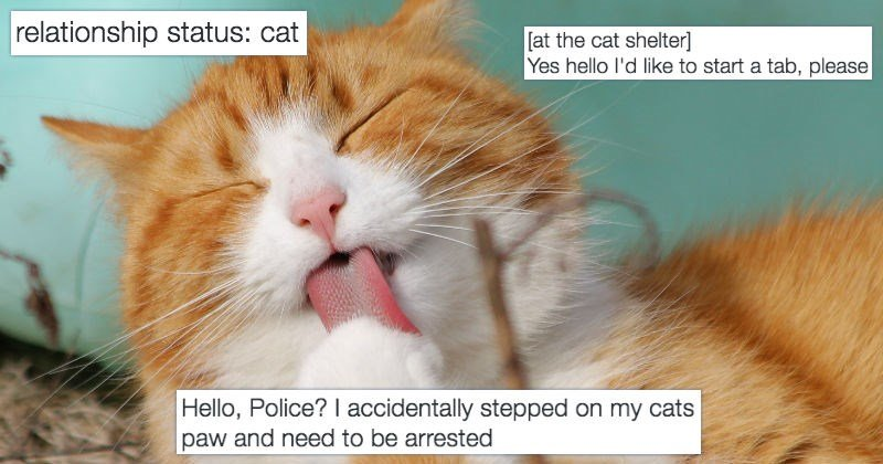 13 Ridiculous Tweets About Cats That Are Guaranteed to Make You Laugh