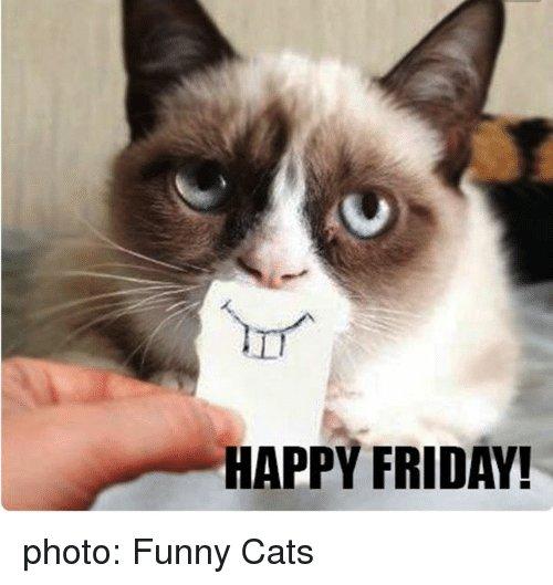 Cats Friday and Funny HAPPY FRIDAY photo Funny Cats