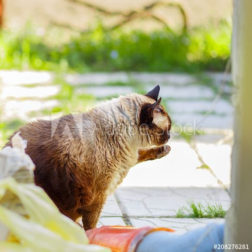Funny cat on a country site in the spring and summer season