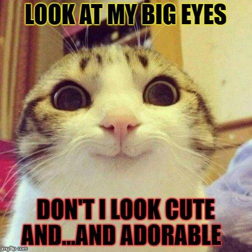 Smiling Cat Meme