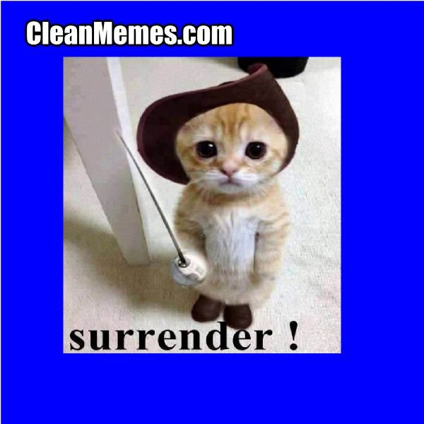Surrender Cat