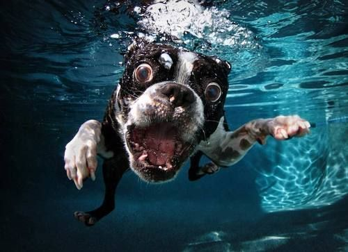 Seth Casteel made underwater dog photography his speciality and we must say it delivers some pretty funny results He lets dogs fetch something in the water