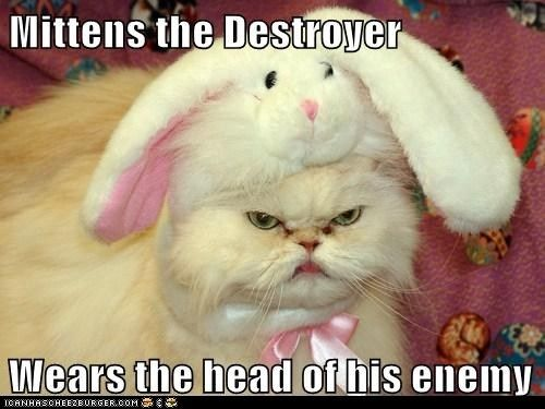 This is one VERY pissed off kitty Cats with bunny ears seems to be a reoccurring item I m willing to bet that cats have Easter marked on their calendar in
