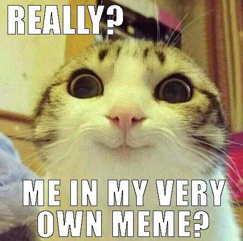 cat crazy funny cat madness selfie