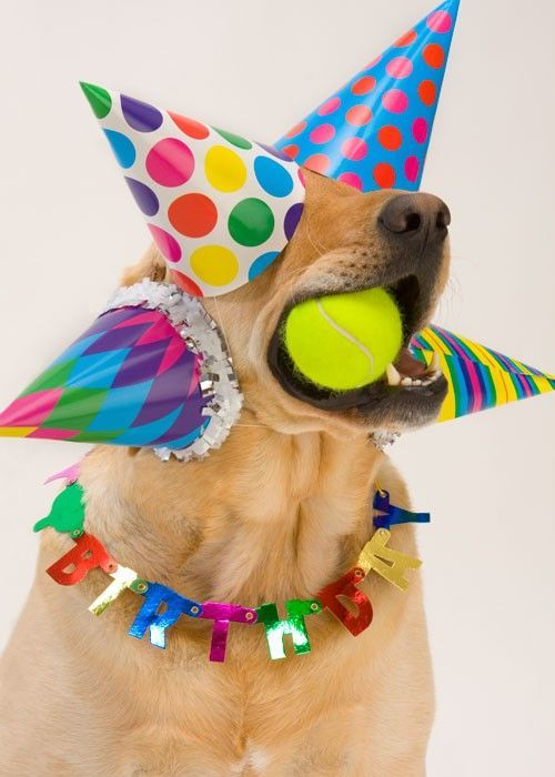 Birthdays · what the Funny Animal