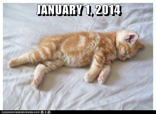Take the Stunning January Funny Cat Memes