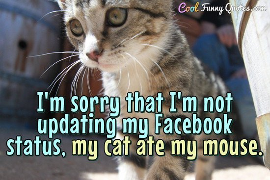 funny quotes about cats I m sorry that I m not updating my status